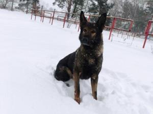 Policejní pes Matrix vypátral celostátně hledaného muže. Spal v kontejneru na odpadky