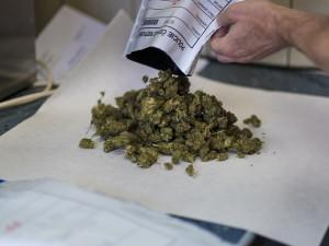 Doma si vypěstoval rostlinu konopí, policisté marihuanu našli při silniční kontrole. Muži hrozí až pět let vězení