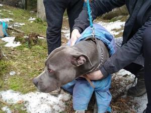 V průrvě skal uvízl pes. Ven mu pomohli až hasiči