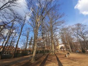 Buky v parku v Liďákách napadl kůrovec. Ohrožuje i stromy v okolí