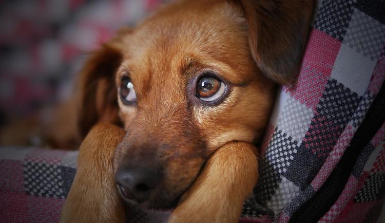 Exmanželé se hádali kvůli venčení psa. Muž po strážnících požadoval kamerový záznam