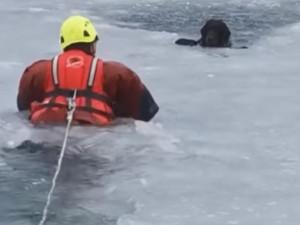 Hasiči vytáhli z jablonecké přehrady psa, pod kterým se prolomil led