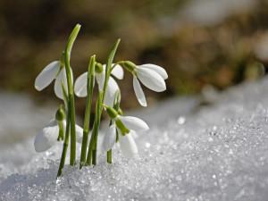 Oteplení zatím nečekejte. Letošní duben bude jedním z nejchladnějších od roku 1941