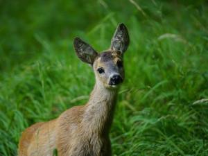 V lesích je nyní plno mláďat. Pejskaři by si měli své psy více hlídat