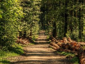 Správci parku v Krkonoších ruší široké cesty. Z části udělají nové turistické trasy