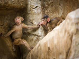 Po stopách Knihy džunglí. Návštěvu liberecké zoo zpestří Mauglího cesta za pokladem