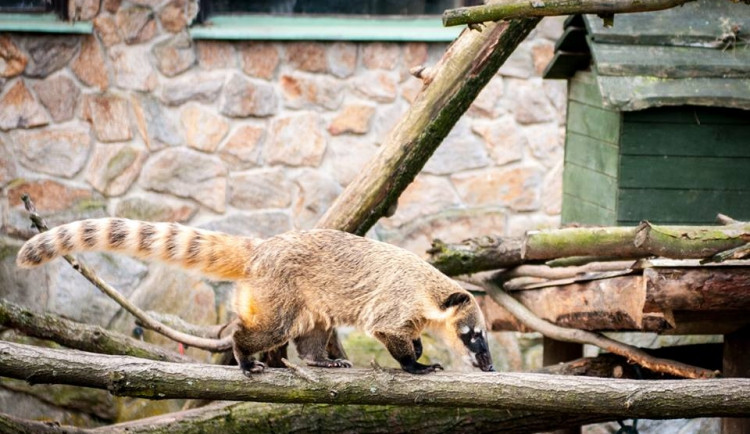Liberecká zoologická zahrada se probudila ze zimního spánku