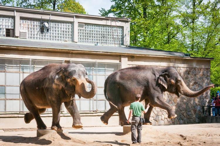 Prosluněná zoologická zahrada v Liberci
