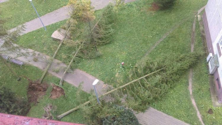 Popadané stromy na sídlišti Rochlice