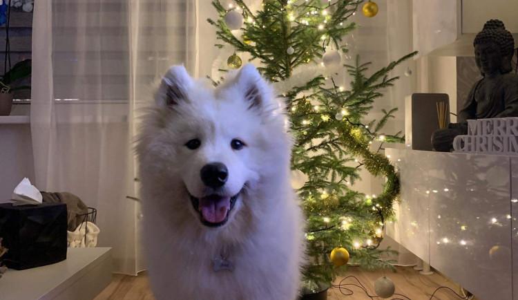 Vánoce s Drbnou: Soutěžní stromečky