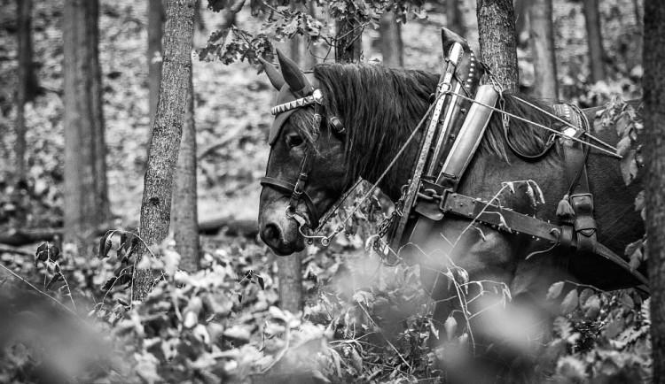 Veronika Králová a kůň Kuba